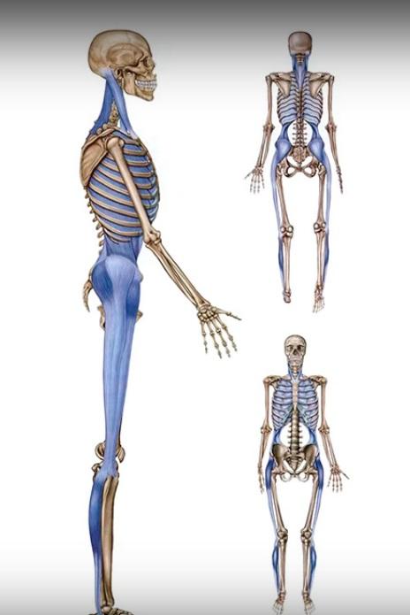 мышечная боль в спине