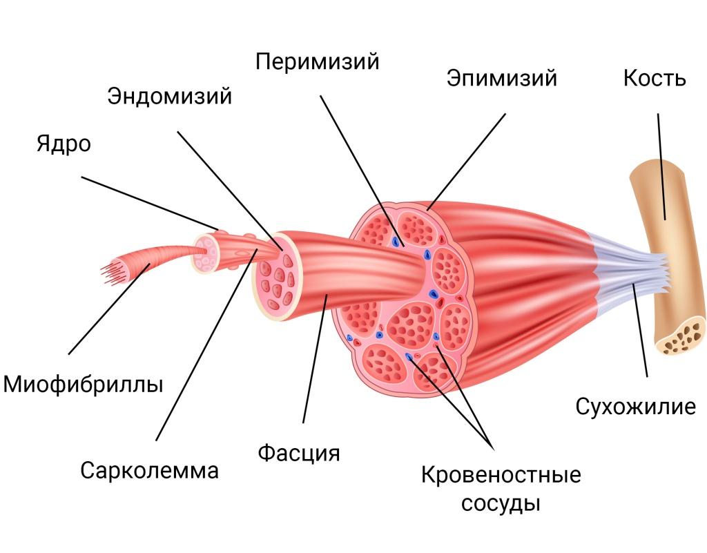 Триггерная точка на теле